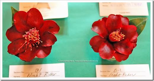 140302_Camellia_Society_Sacto_Show_043