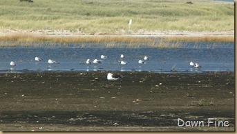 Birding south beach_073