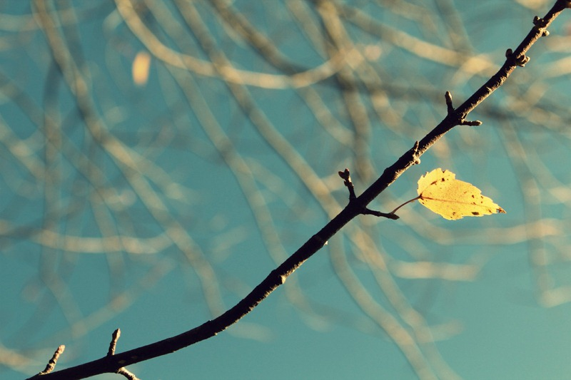 last leaf