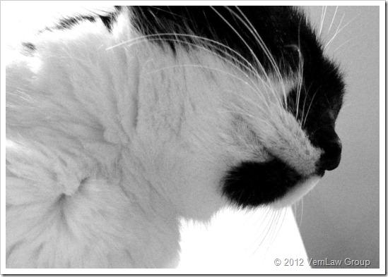 Angle_Cat_1