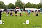 20100513-Bullmastiff-Clubmatch_30860.jpg