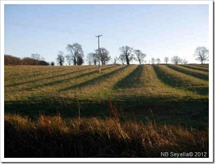 Ridge and furrow Dec 2008