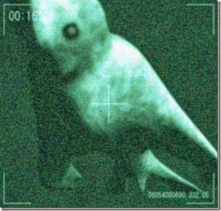 criaturas en antartida