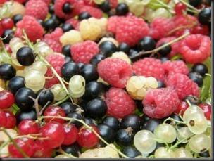 nirvana berries
