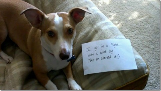 dog-shaming-bad-6