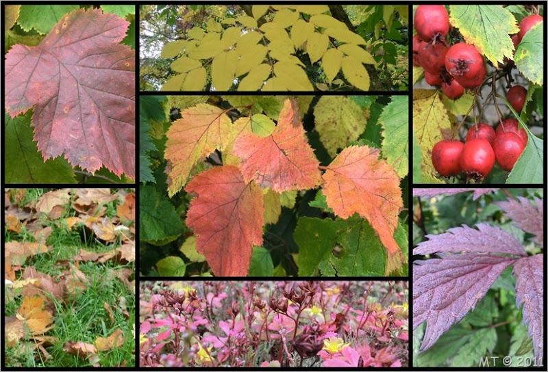 2011-09-241 autumn colours