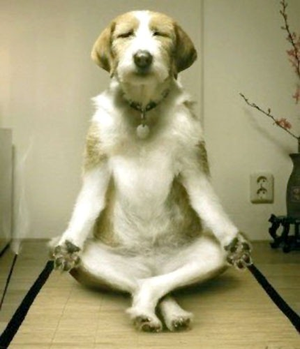 [Doggie-buddha3.jpg]