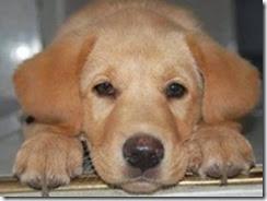 Cronograma de octubre de castraciones gratuitas para perros en zona sur