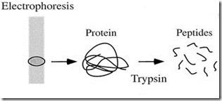 protein fingerprinting