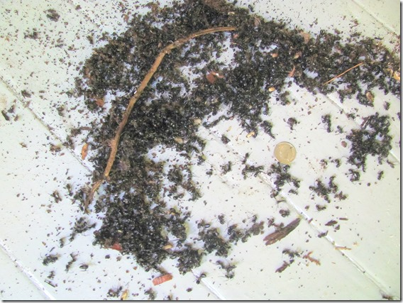 pile of dead ants