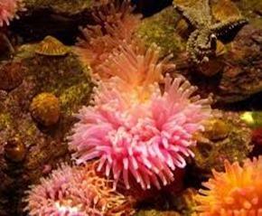 Amazing Pictures of Animals, photo, Nature, exotic, funny, incredibel, Zoo, Sea anemones, Actiniaria, Alex (17)