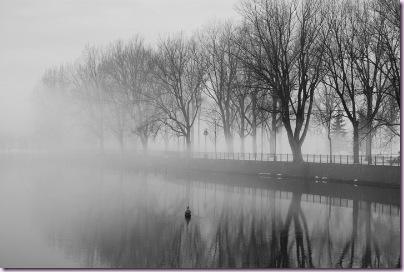 fog, duck