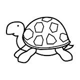 Tortuga.jpg