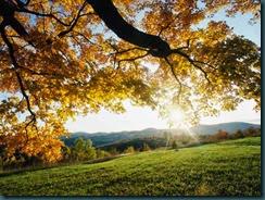 秋天的楓葉。