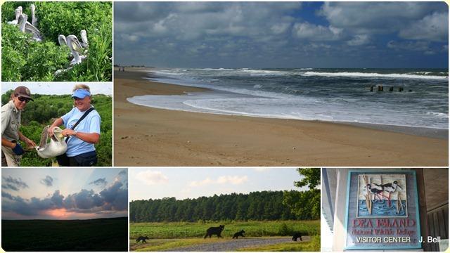 15 Pea Island, Alligator River NWR, NC1