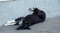 Hunde-Siesta