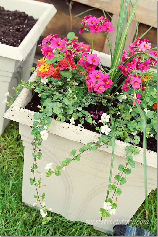 Planting Flowers in Containers Using the Thriller, Filler, Spiller Method