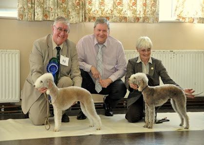 bedlington pictures: t0day at the bta championship show