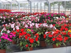 2014.07.19-059 jardin des plantes