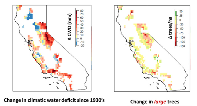 Severe water stress (left red) since the 1930s mirrors the decline of large trees (right red) seen throughout California state, from the Sierra Nevada to the Coast Ranges. Graphic: McIntyre, et al., 2015