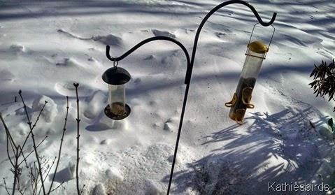 14. bird feeders 2-16-15