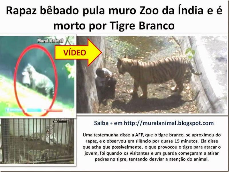 Rapaz bêbado pula muro Zoo da Índia e