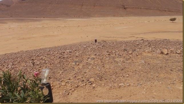 Desierto-329