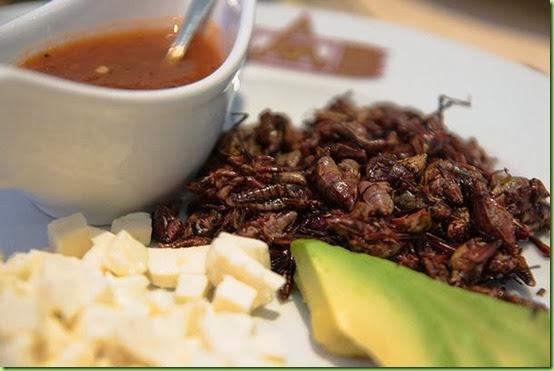 grasshopper taco-oyamel grpg