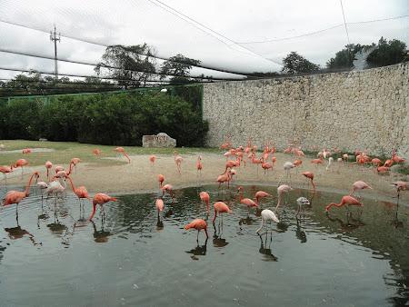 Vacanta Mexic: Xcaret flamingo