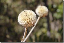 Reeditor Ambiental VIII 2011 - Trilha Rina (120)