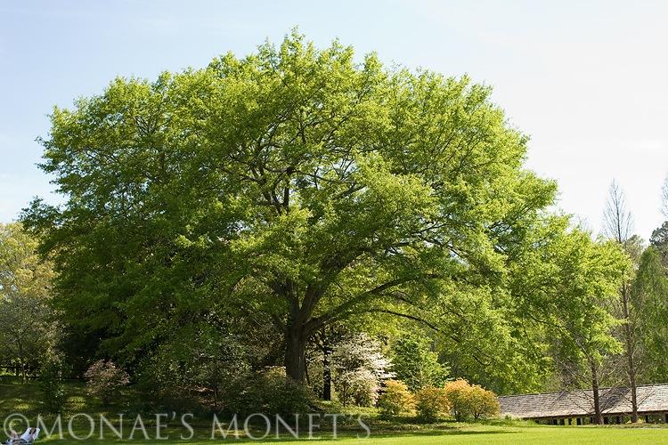 Callaway tree blog