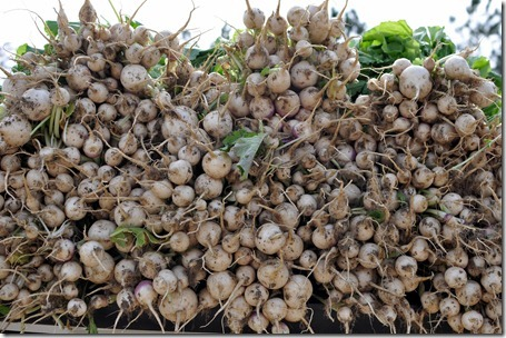 fall produce 1112 (53)
