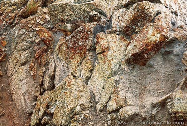 camuflagem-invisivel-animal-camouflage-photography-art-wolfe-desbaratinando (6)