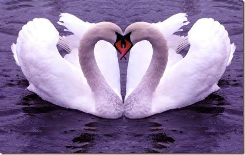 2 corazones blogdeimagenes com (4)