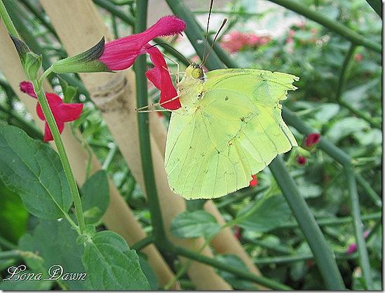 LG_Butterfly_Green