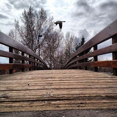 19. Otoño en el puente