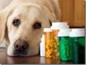 animali farmaci
