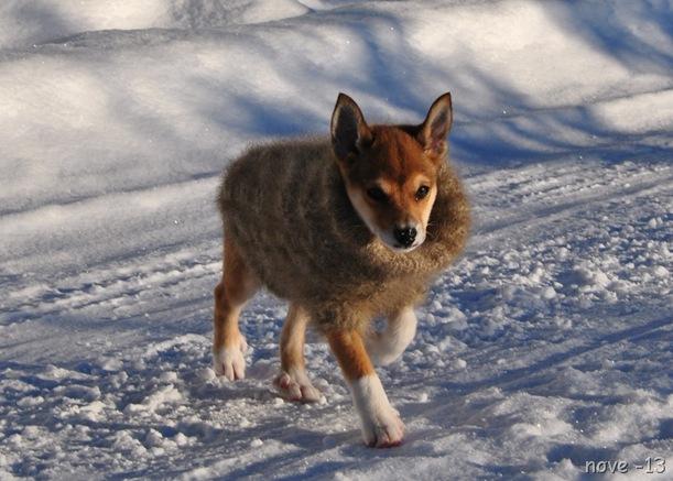 hund 022