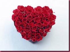 udaan roses