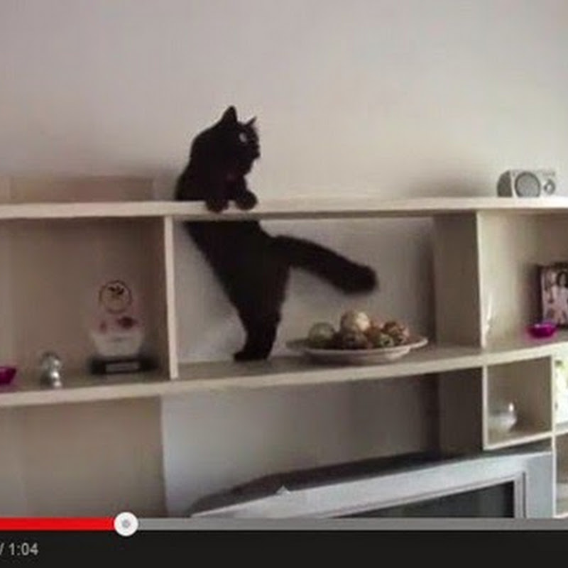 Mission Impossible Cat