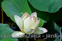 Glória Ishizaka - Jardim Botânico Nagai - Osaka