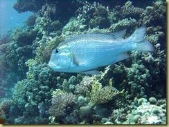 SG Fish