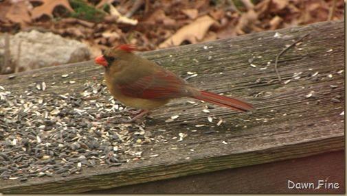 Feeder birds_031