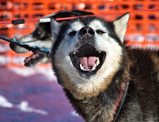 Dog 4