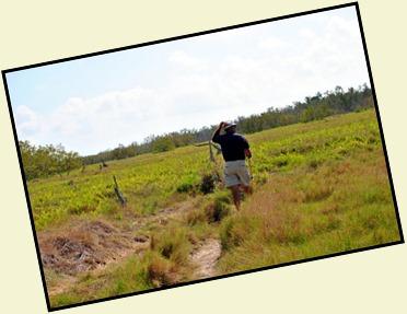 12 - Through the grass prairie