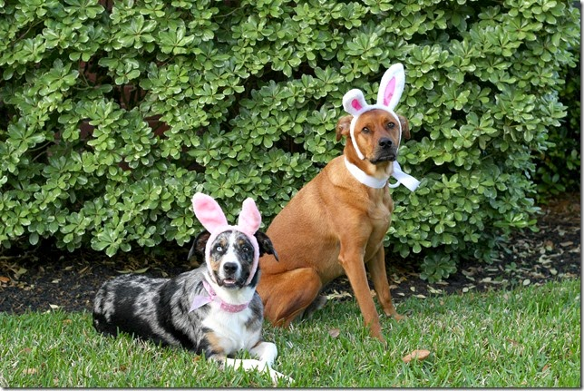 Dogs Dressed for Easter