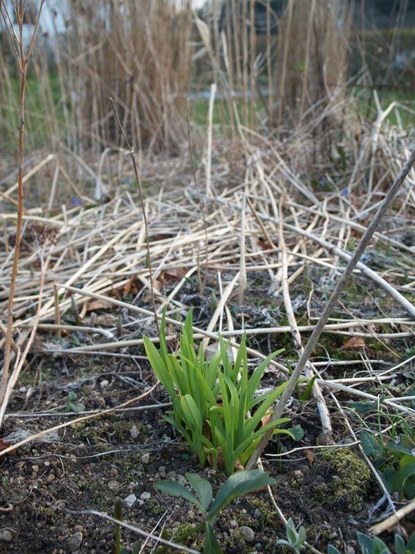 2012-03-30 Hagen på Møll (37)