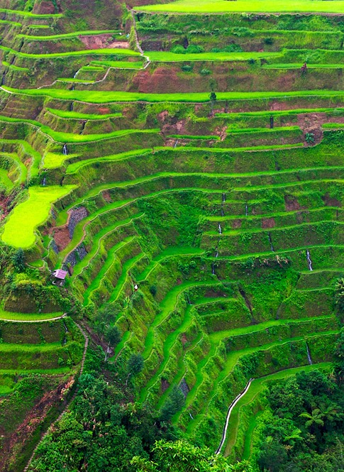 Banaue, Philippines – Terraced Rice Fields