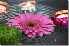 blommor 090 kopiera