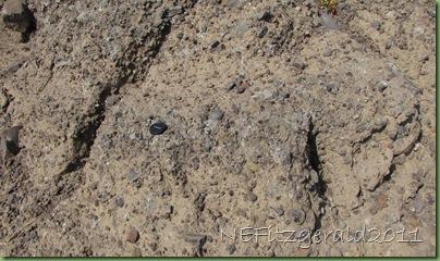 IMG_8847Breccia Outcrop